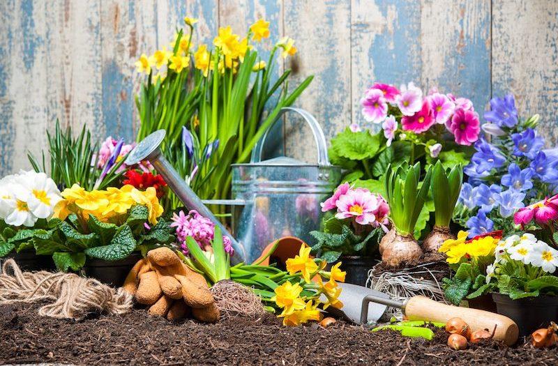Hauszeit - Gartenservice